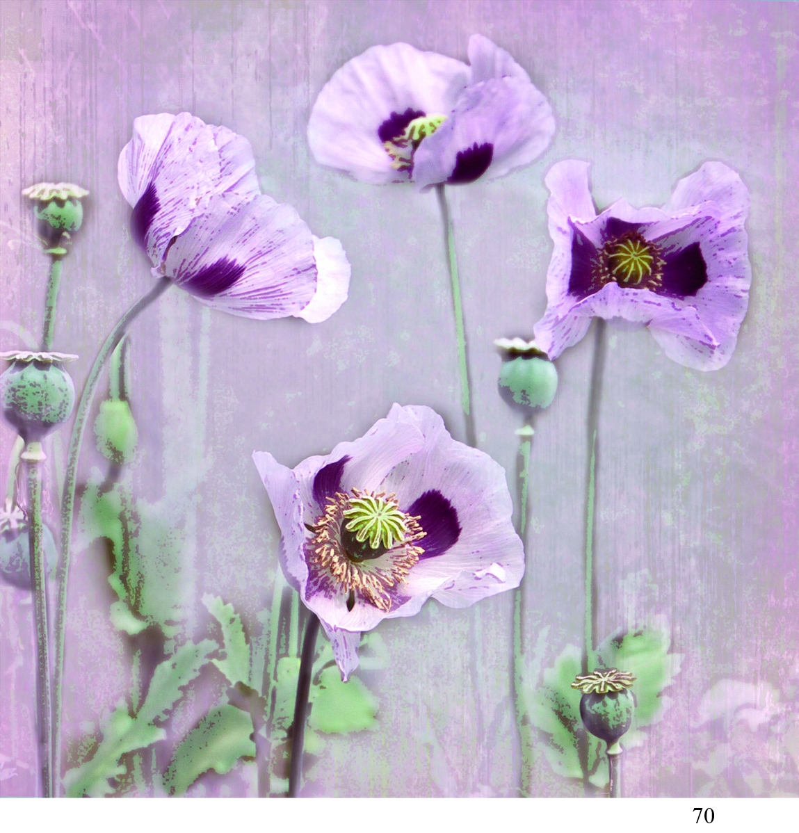 70 poppies Alison Parsons Smith arty cards 6x6.jpg