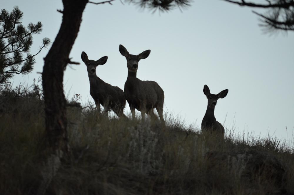 Animals of the Southwest USA