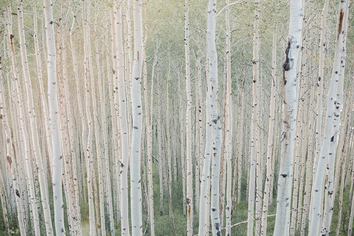 Colorado Aspens on Film