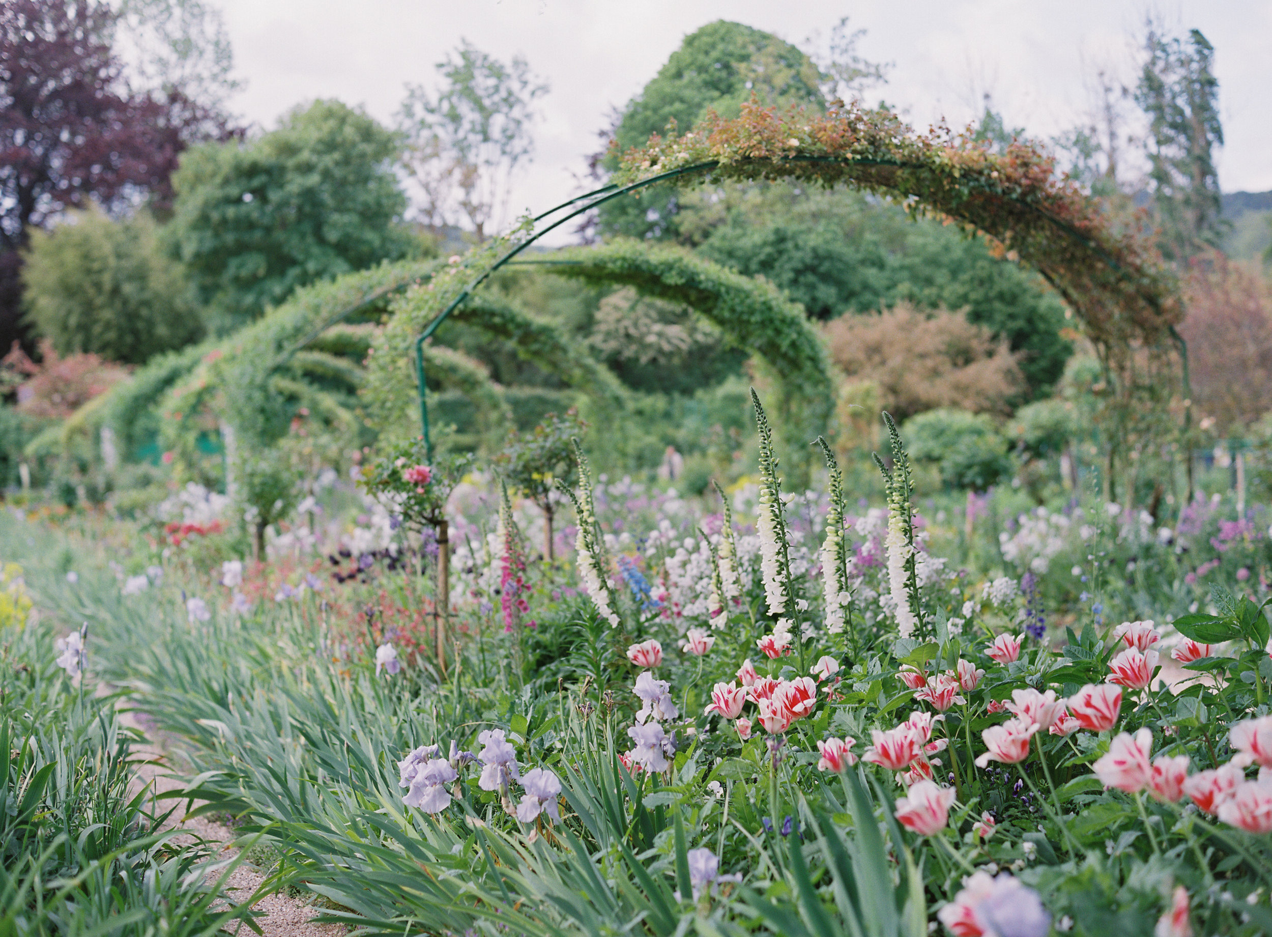 French Garden - copyright: Carrie King Photographer