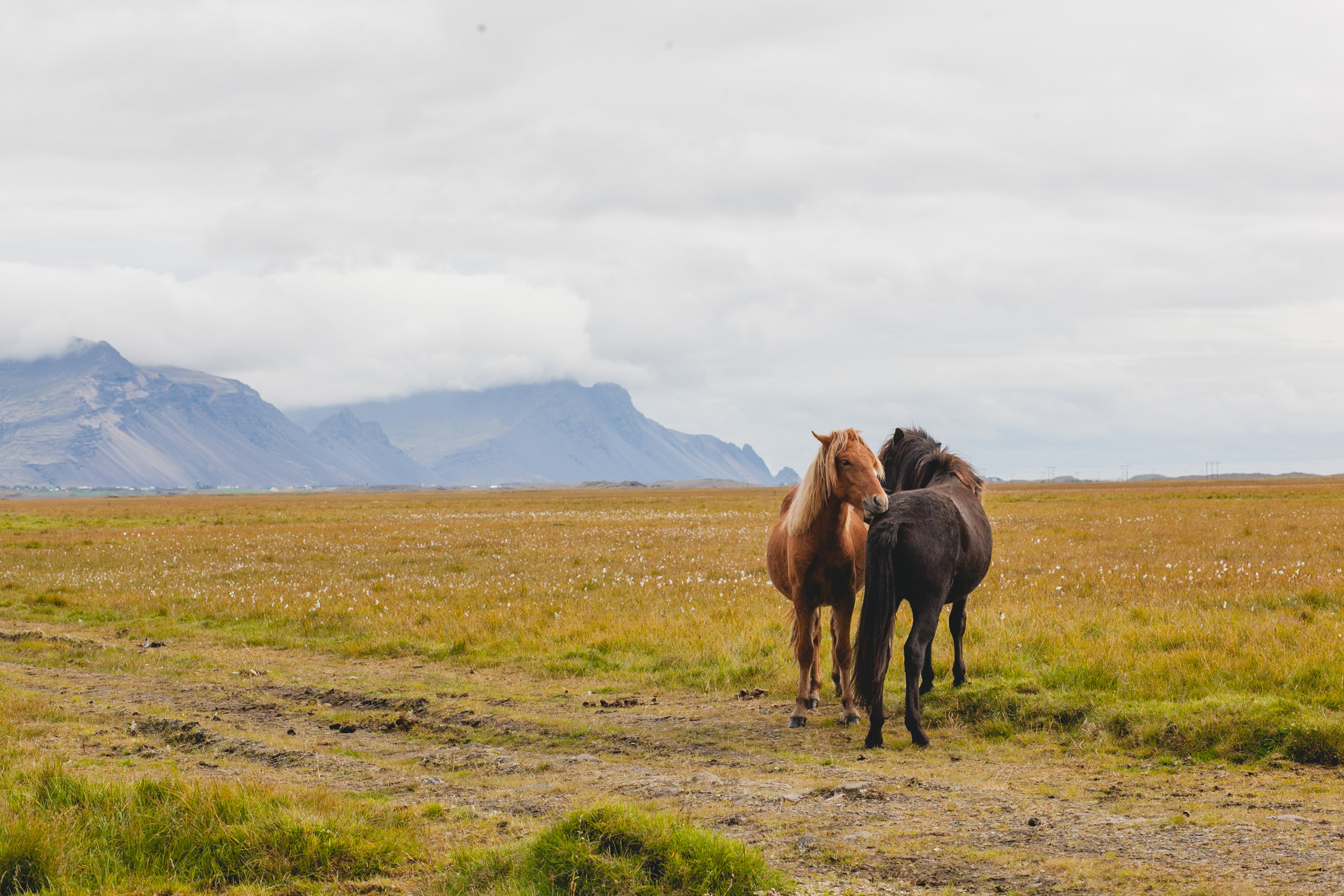 HORSES (1 of 1).jpg