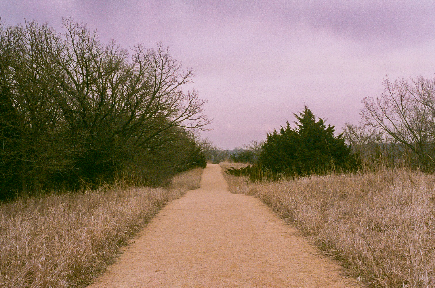 Good Earth State Park, Minolta SRT 201, shot on expired kodak gold 400