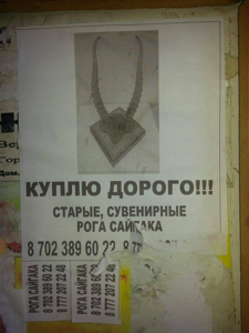 Ad for saiga horns reported during the ACBK campaign