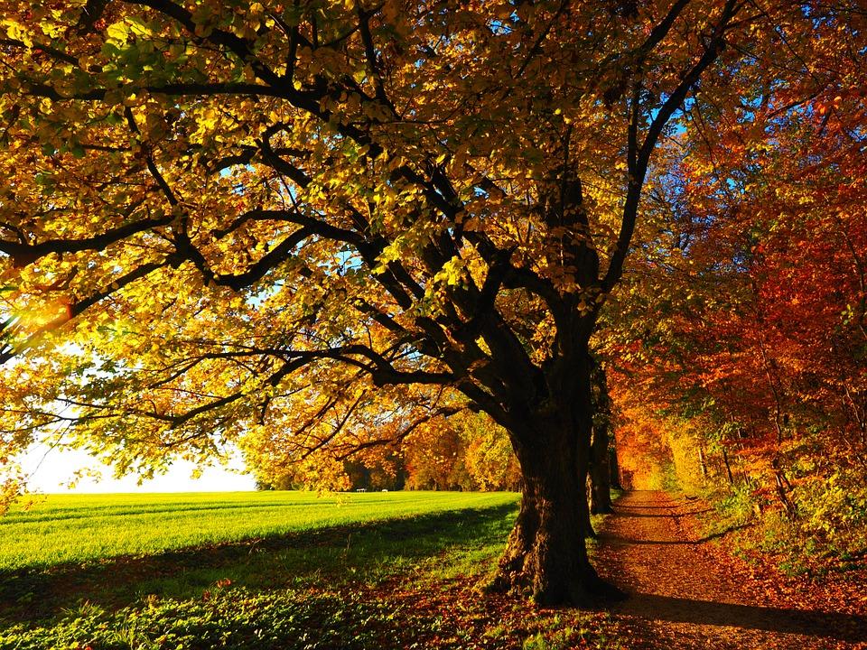 tree-779827_960_720.jpg