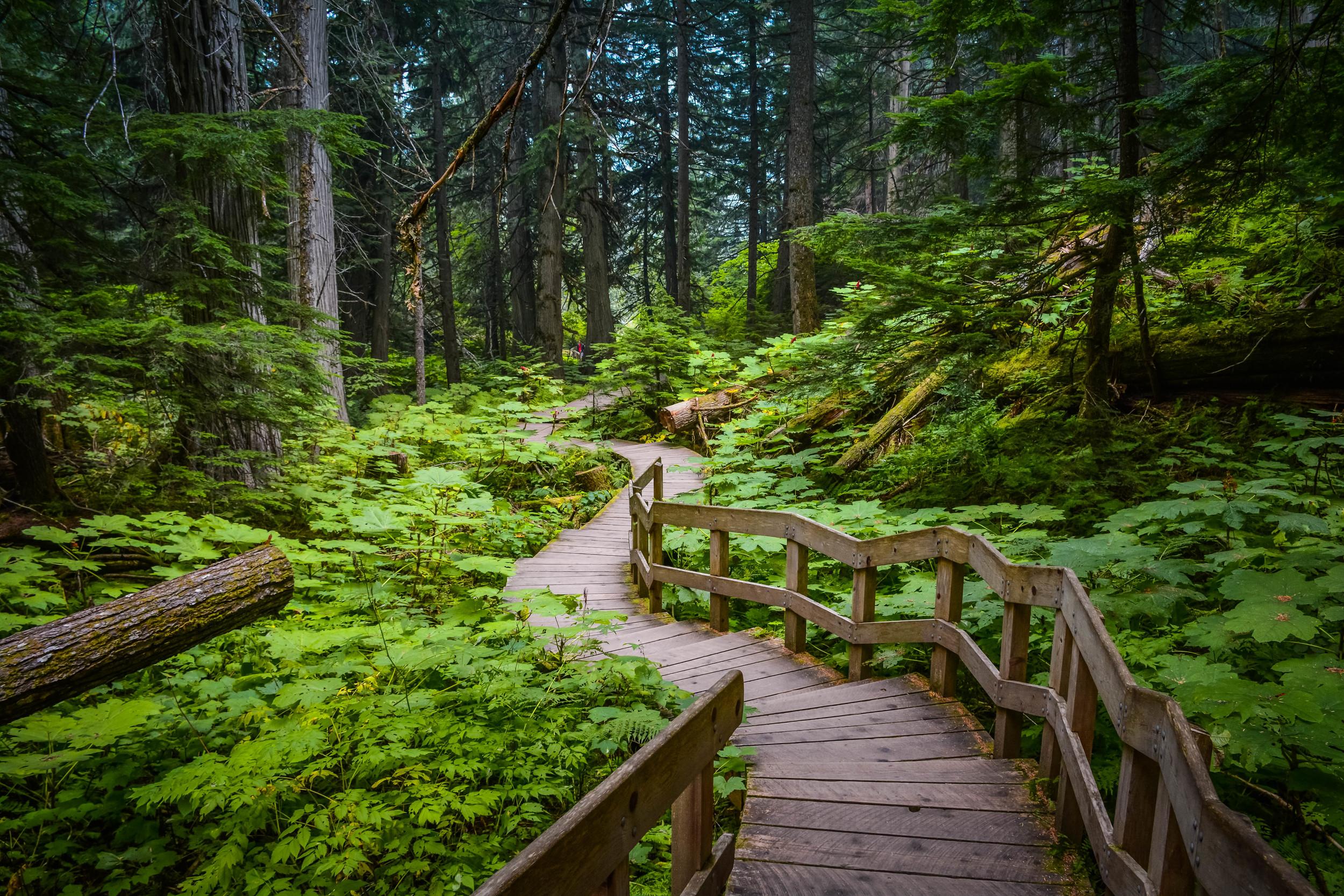 Down the Path.jpg