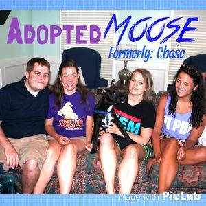Chase-moose+adoption.jpg