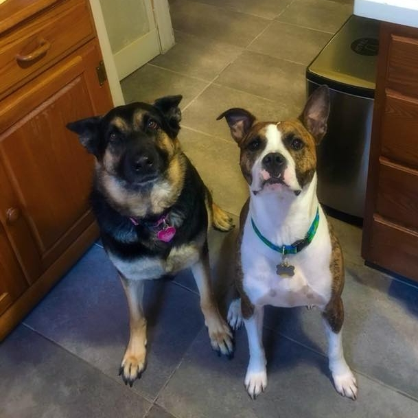 SDF alum Reese and adoptable Marcel really want some of that pie.