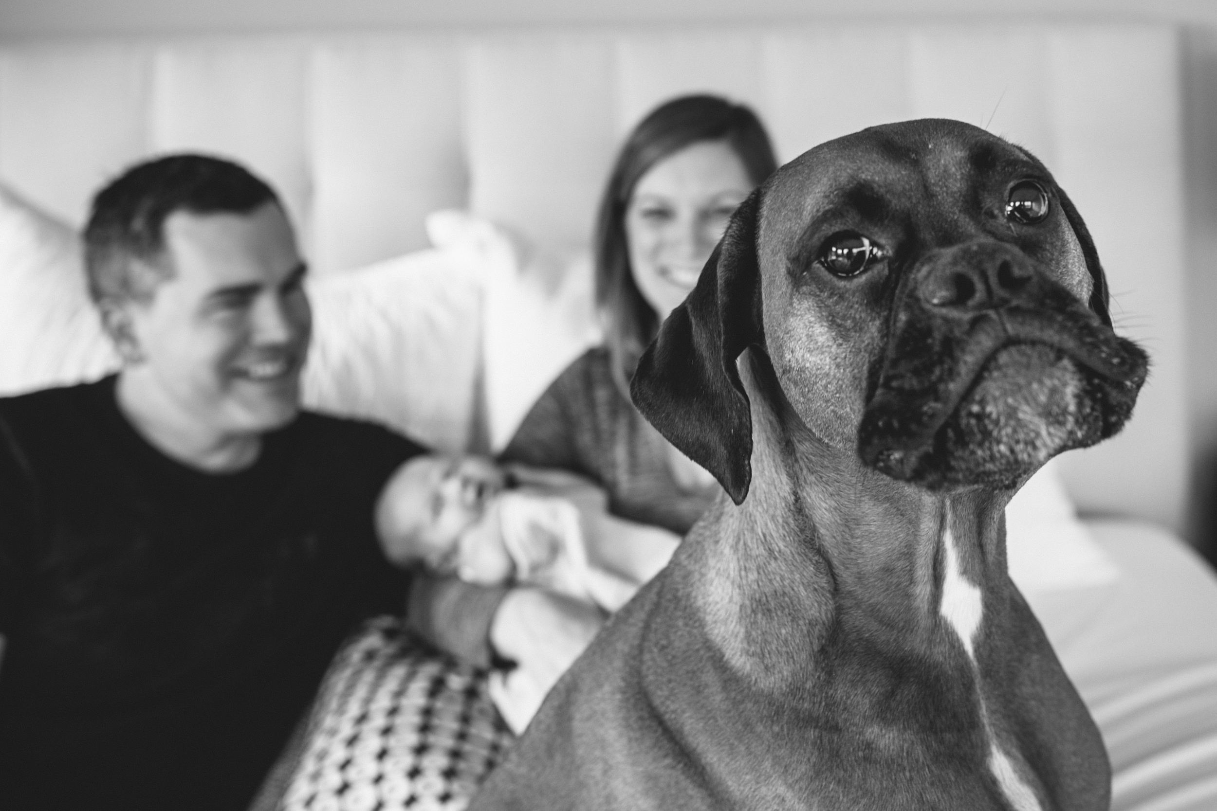 image of dog sitting on bed in front of family with newborn from at home newborn documentary session