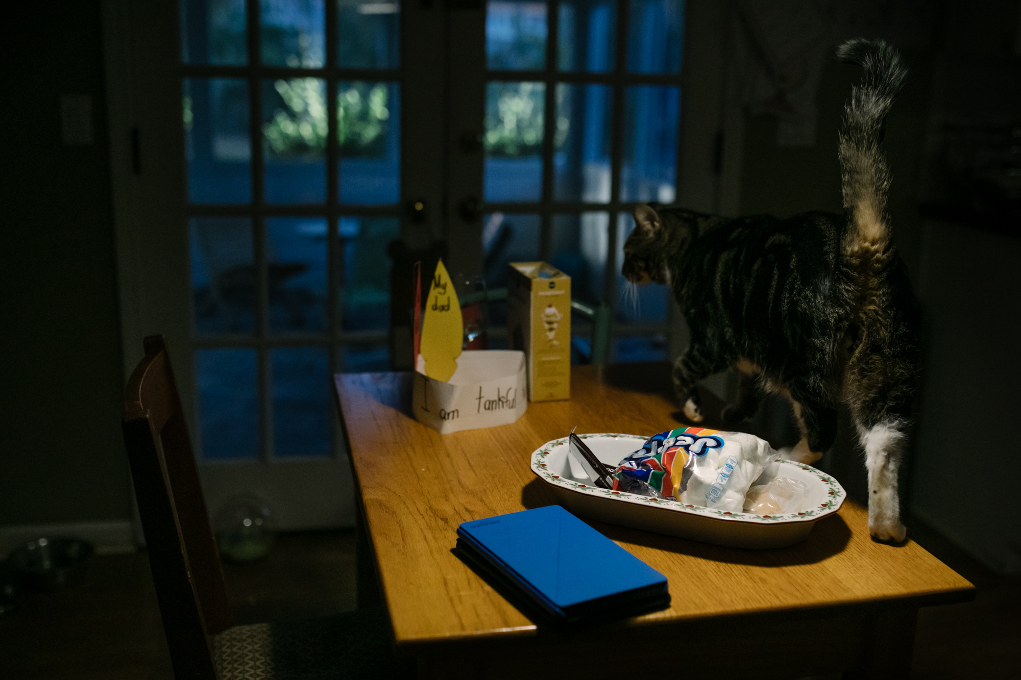 A cat walks on a table by a plate of marshmallows