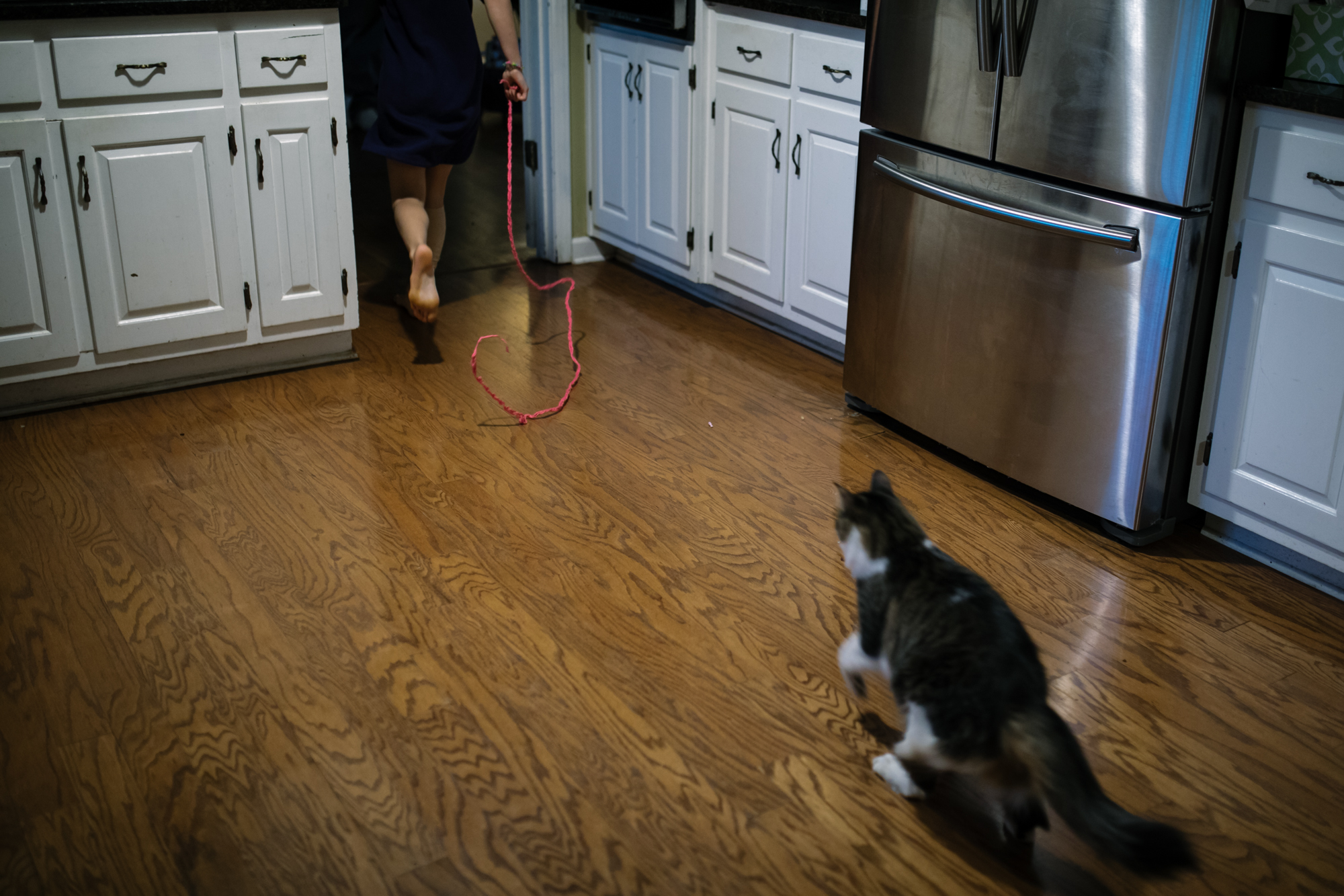 A cat chases a red string through a kitchen