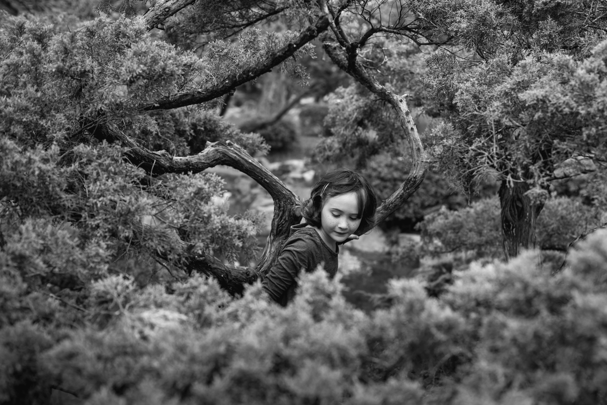 a girl climbs through a tree