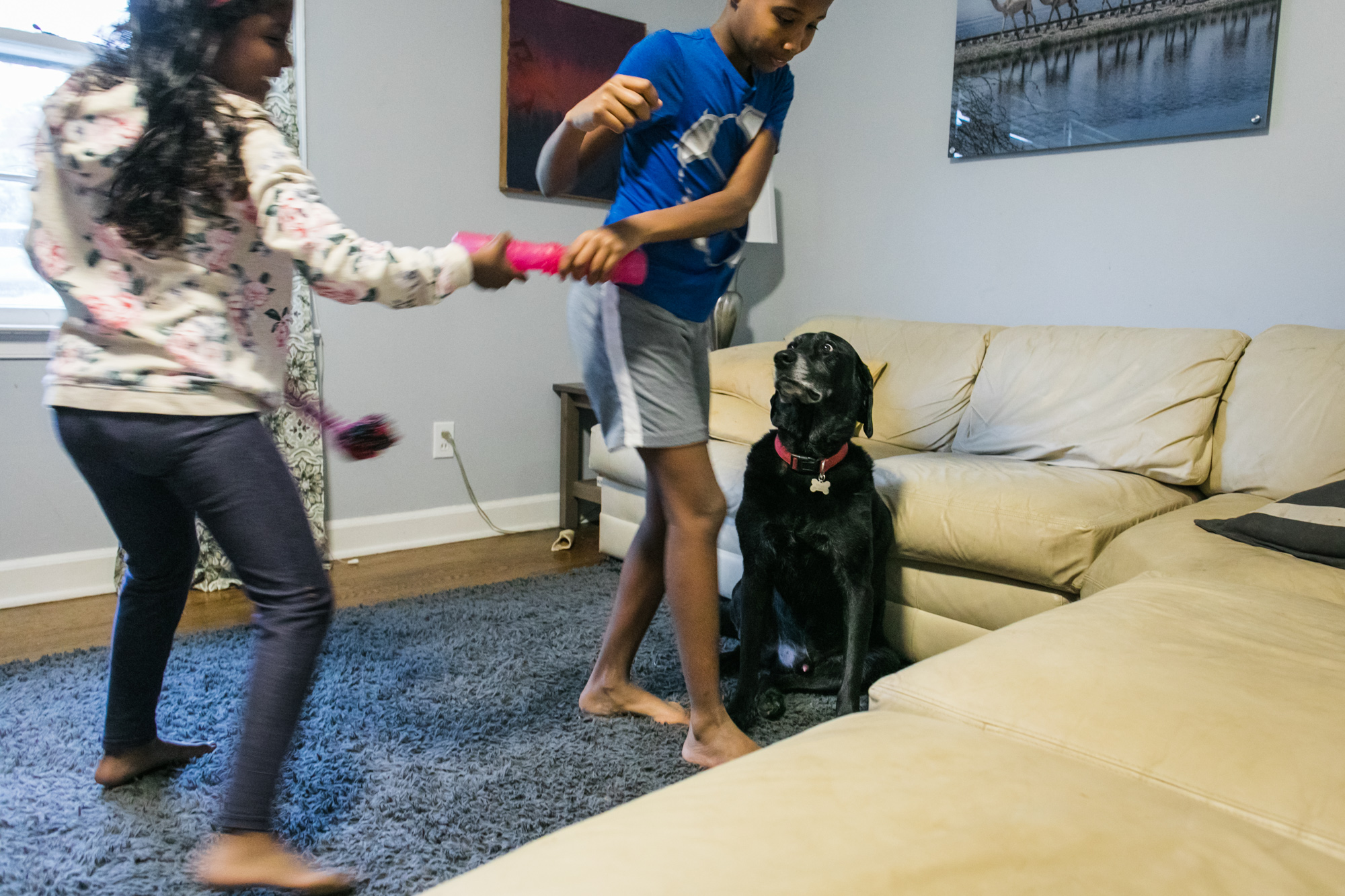 a dog watches incredulously as a boy and girl play tug of war with his dog toy
