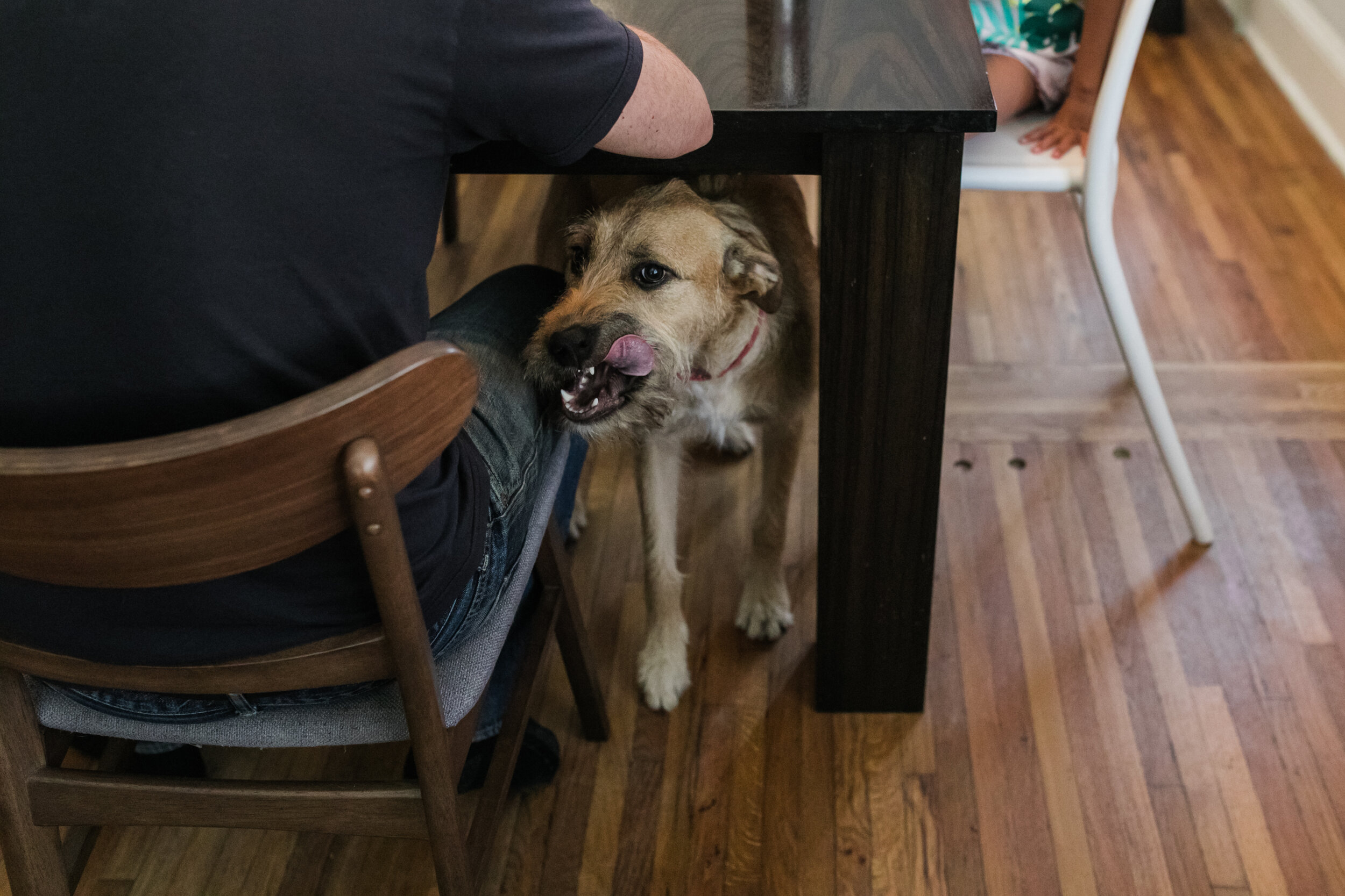 image of a dog coming out from under the table licking his face from a day in the life photography session