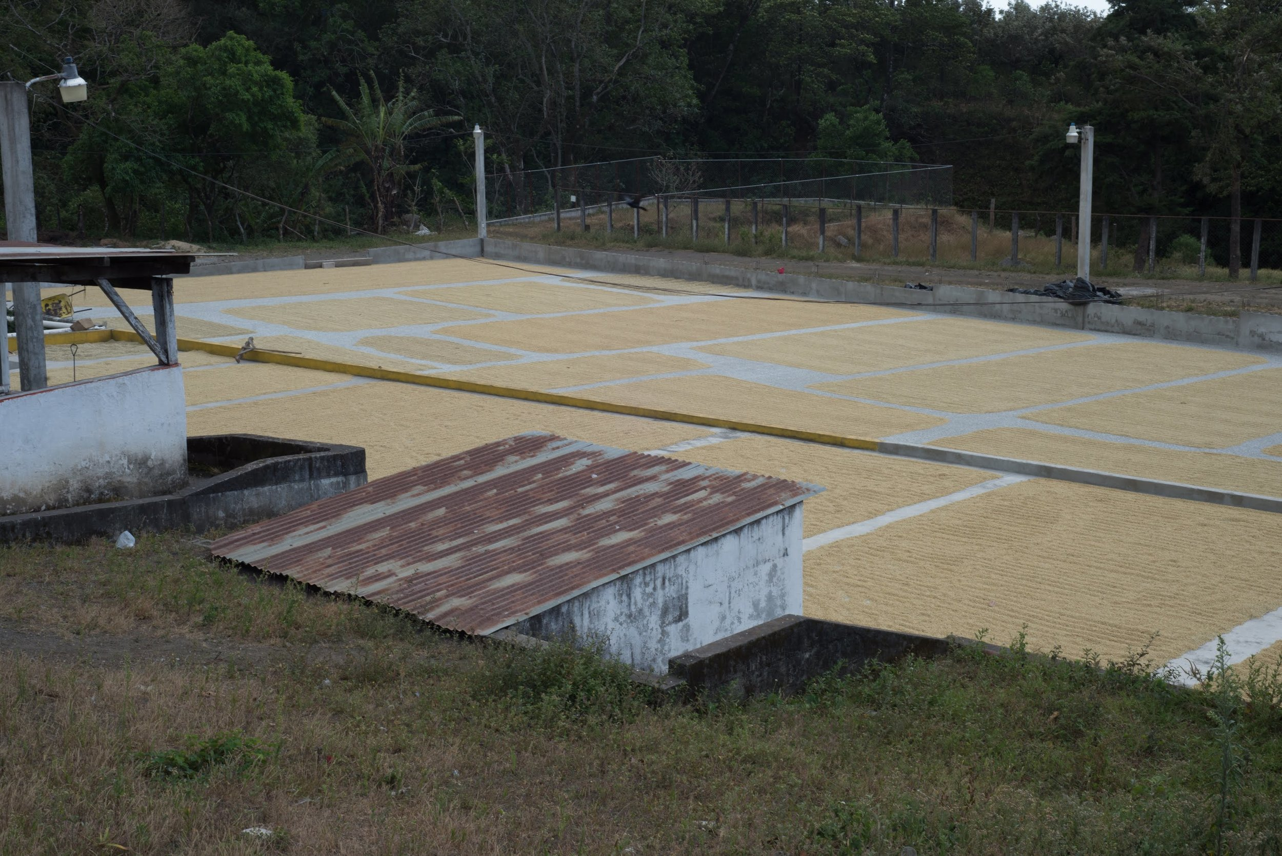 Drying Patios and Separated Lots
