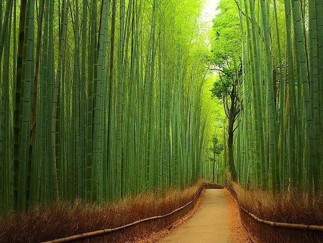 Tüm gezide en sevdiğim yer Bambu ormanı oldu!