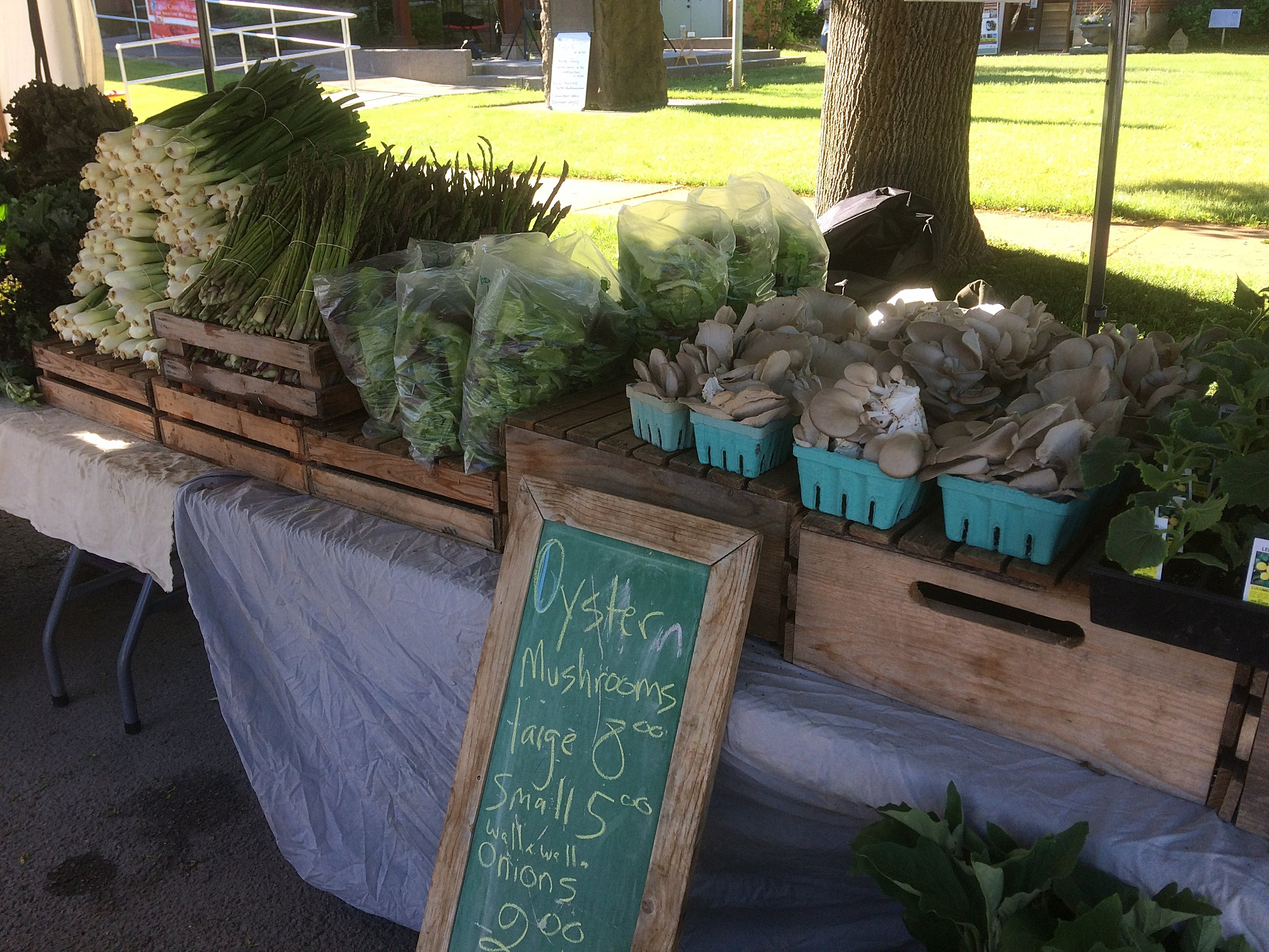 Hamilton Farmer's Market - Come check out our stand on the west side of Bedford St. 9:00-12:30; Saturdays May - October.