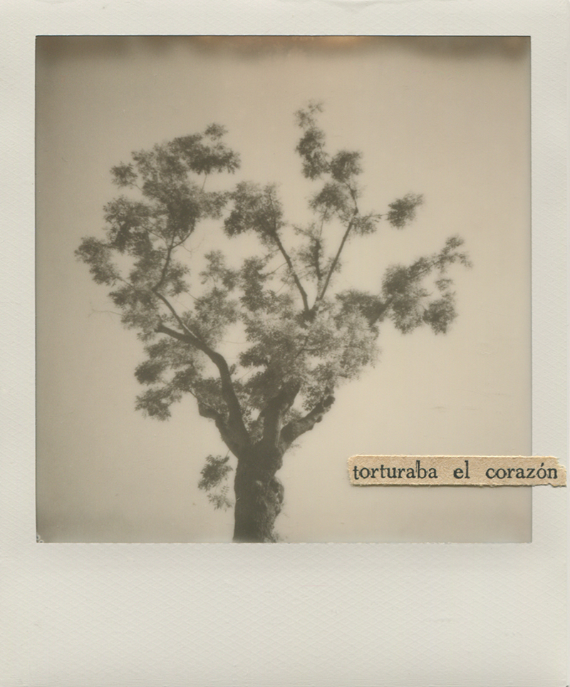 Polaroid 14 - Natalia Romay.jpg