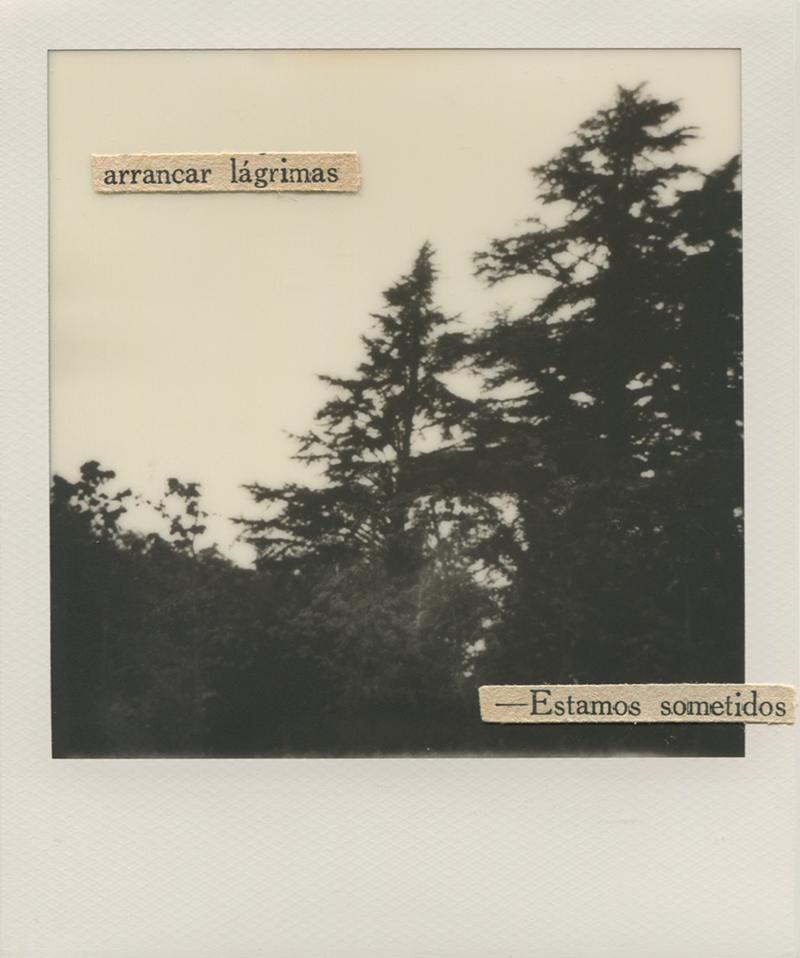 Polaroid 16 - Natalia Romay.jpg