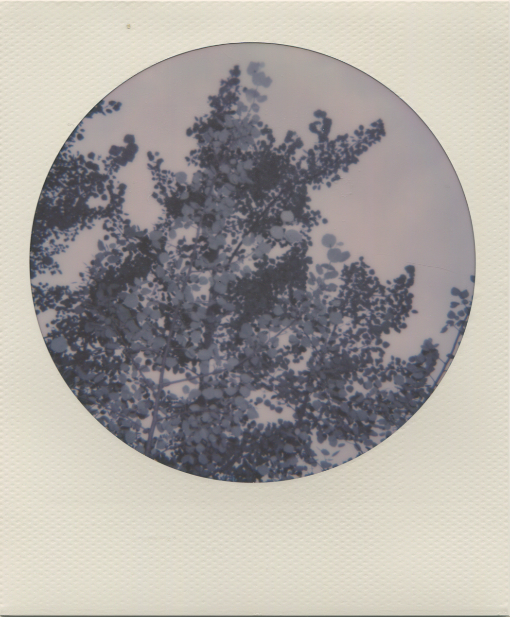 Polaroid redonda - NataliaRomay.jpg