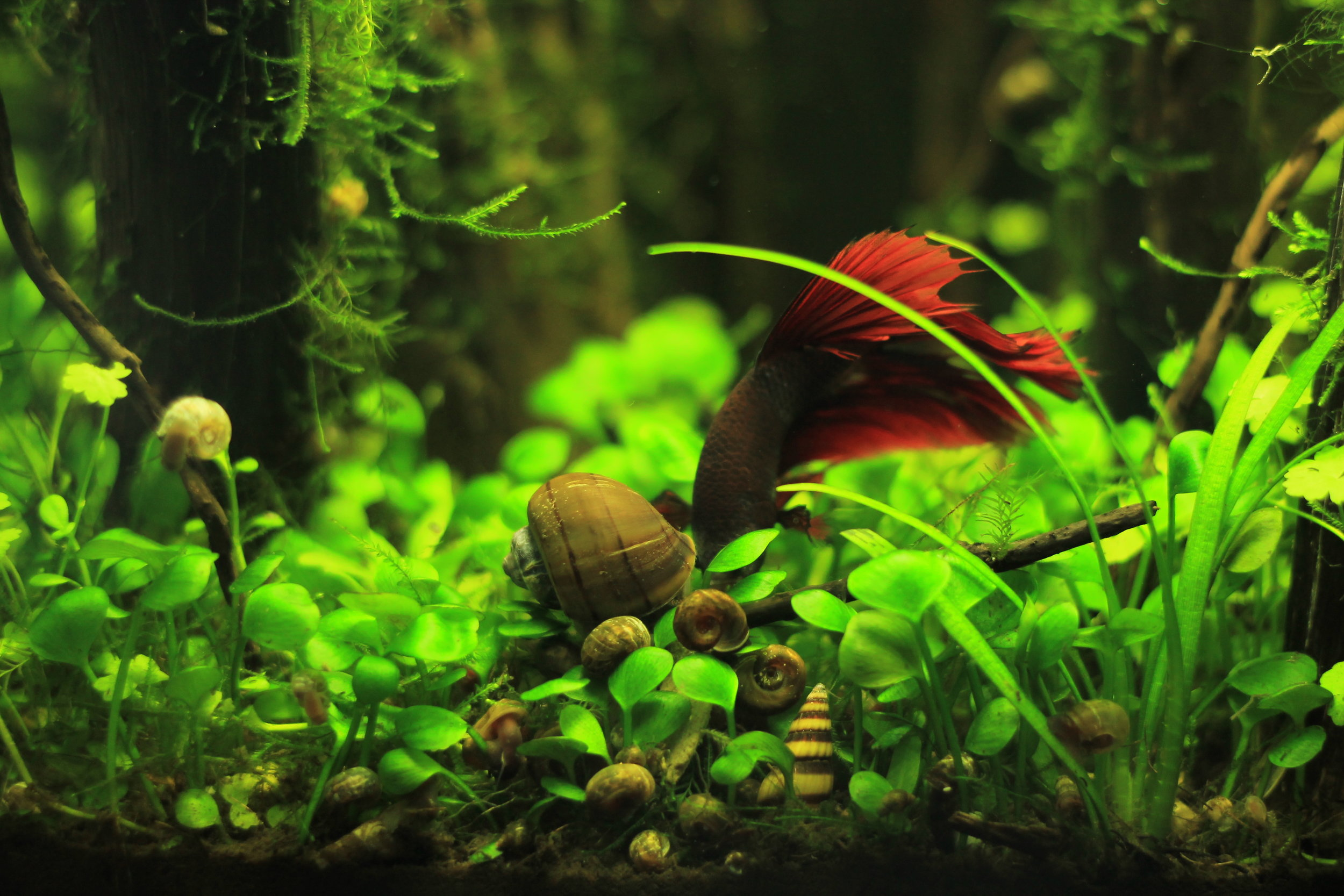 """""""Gaining the knowledge to care for fish, what you do to the water, how you treat it, clean it, etc. all has a major impact on all lives in the tank. If one of your little guys die you have questions about what did you do, was it the water? Did you overfeed? This has me caring for fish when I never knew I would. Just figured eh they're fish, who cares."""""""