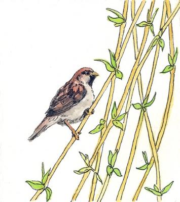 "Teresa Baksa, Little Male Sparrow, watercolor & ink, 6"" x 5"""