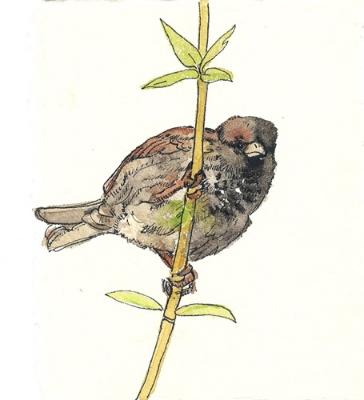 "Teresa Baksa, Old Sparrow, watercolor & ink, 6"" x 5"""