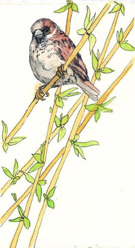 "Teresa Baksa,  Wise Sparrow , watercolor & ink, 8"" x 4"""
