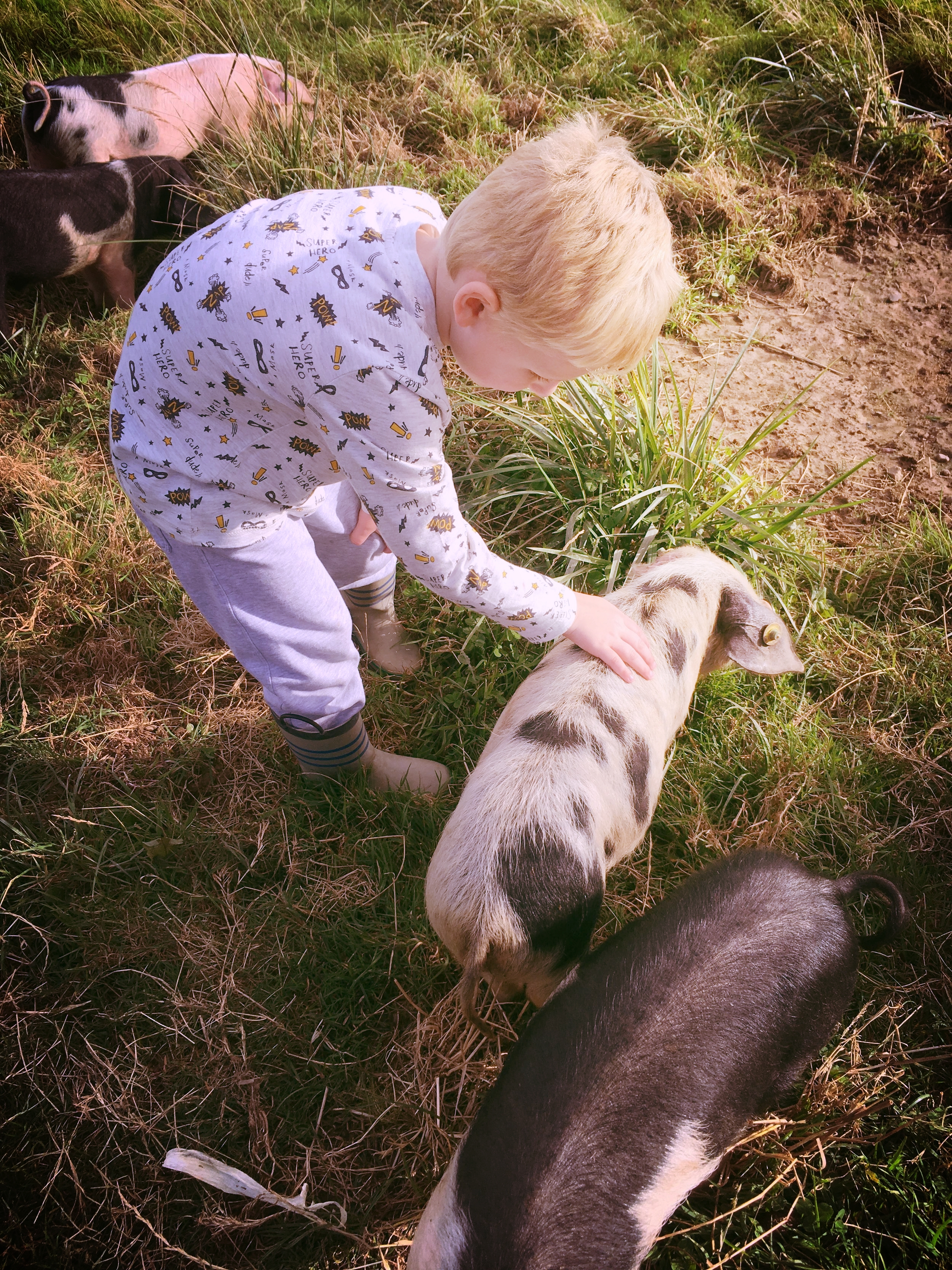 Mucking in with the pigs
