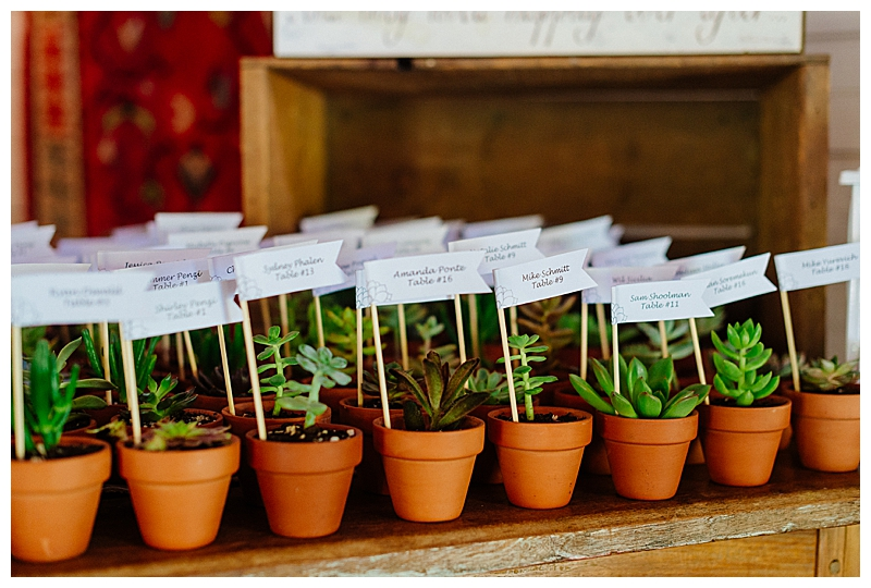 Potted plants for wedding gift favors