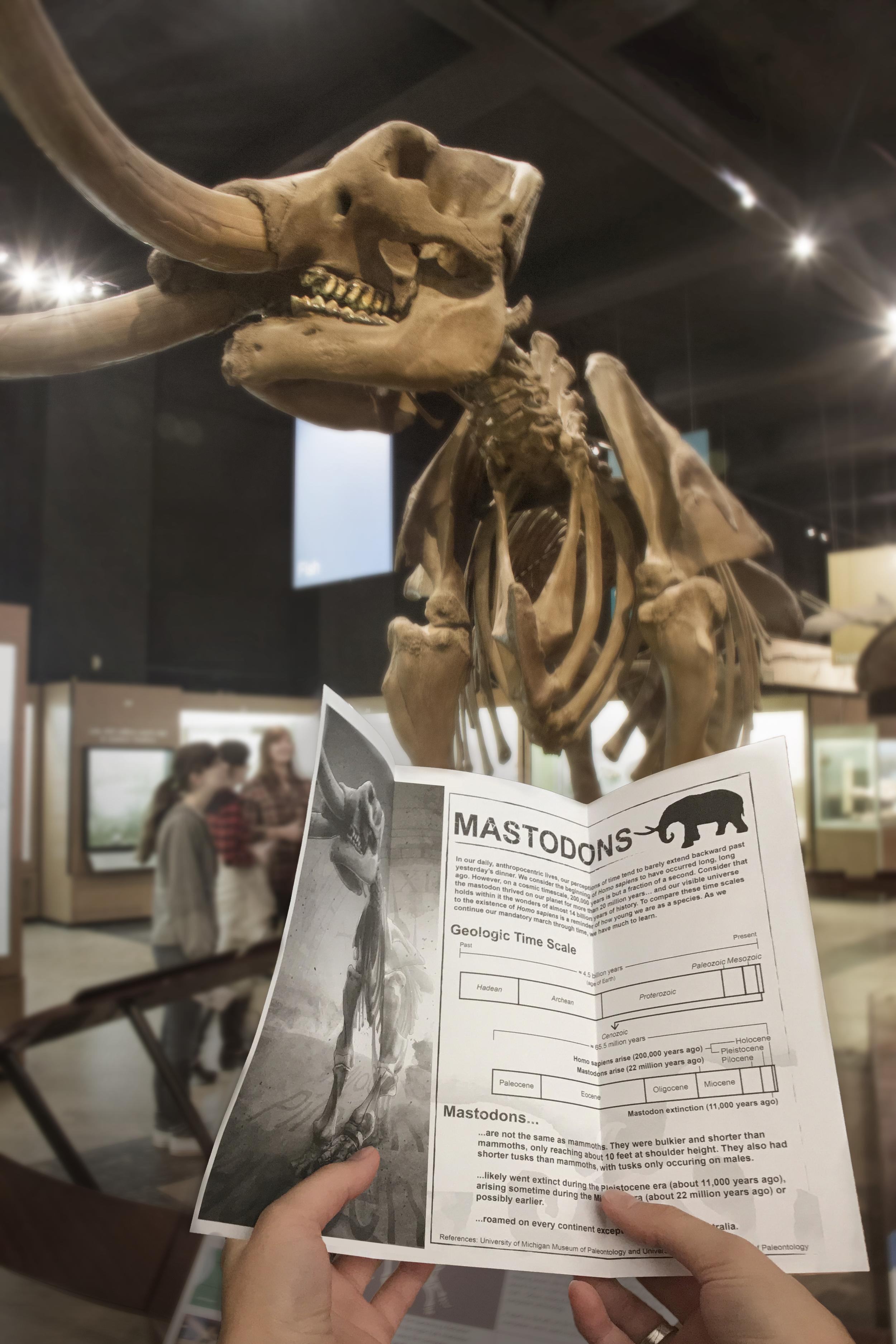 mastodon_museum_illustration