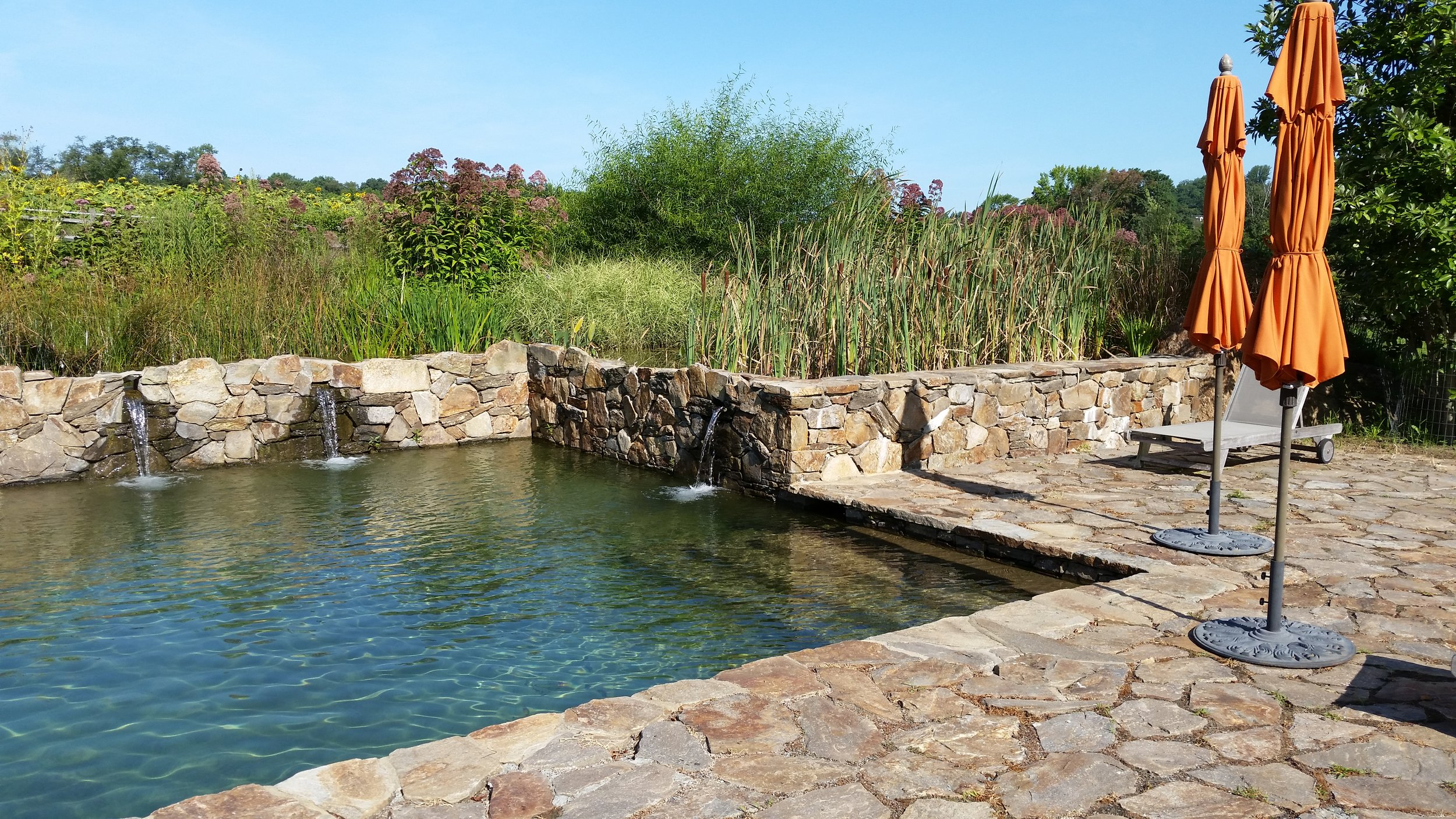 An all natural swimming pool — PondWorks