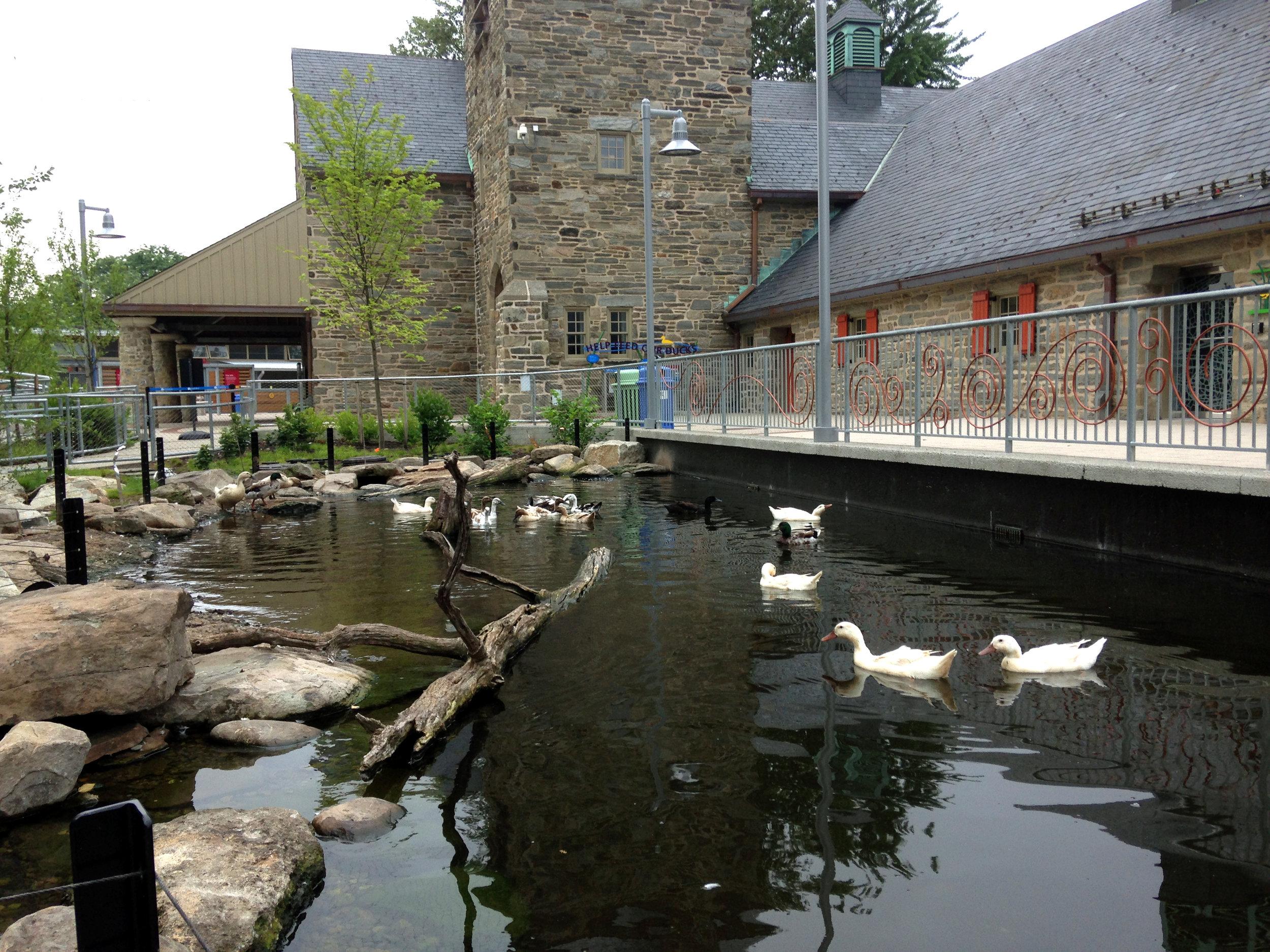 Pondworks_Philadelphia zoo_duck pond.JPG