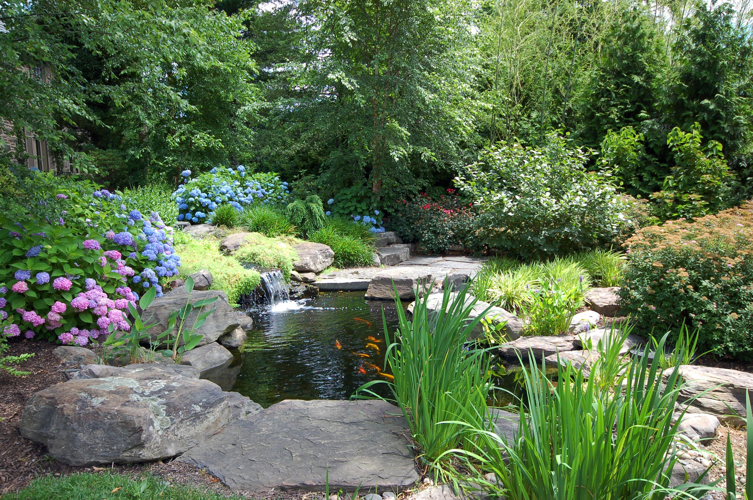 Pondworks_koi pond_garden_fish_design build.jpg