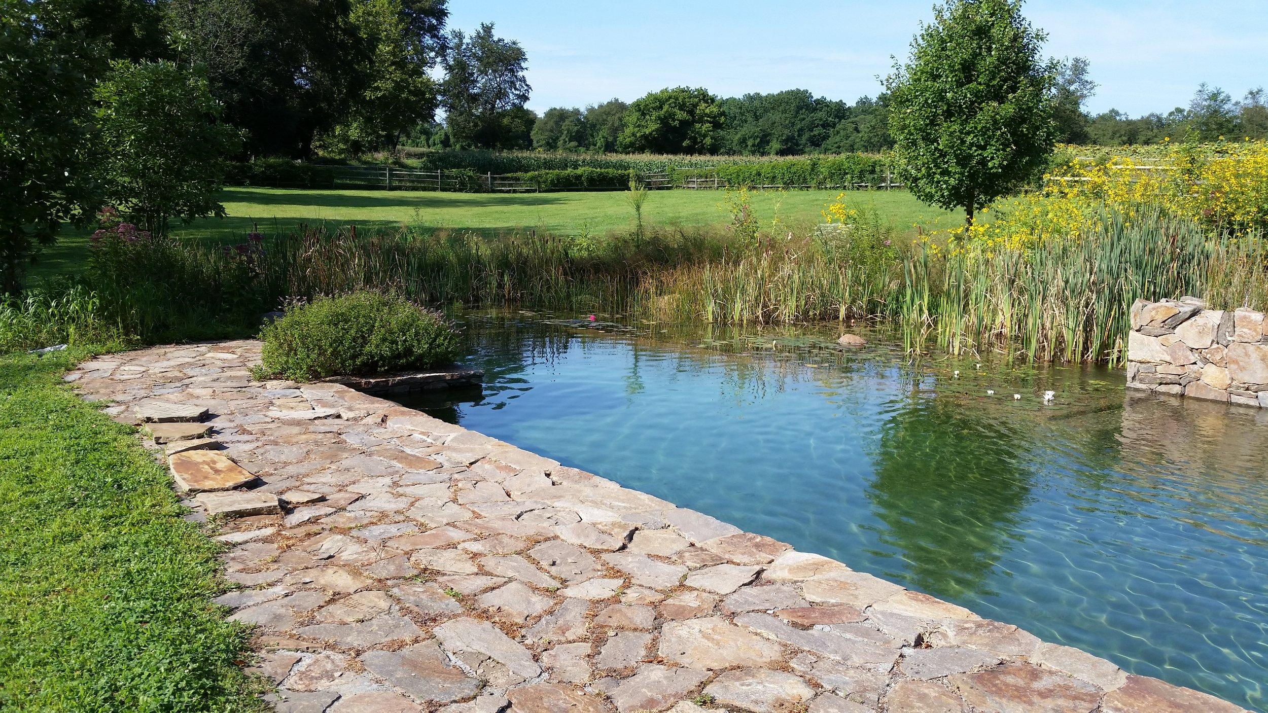Pondworks_natural swimming pool_nsp_01.jpg