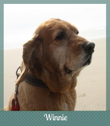 Adopted dog Winnie
