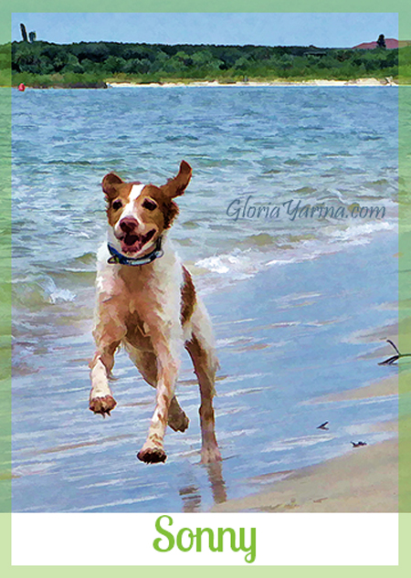 Adopted dog Sonny