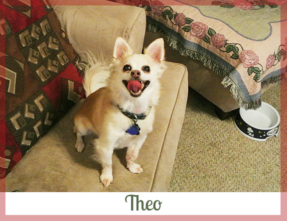 Adopted dog Theo