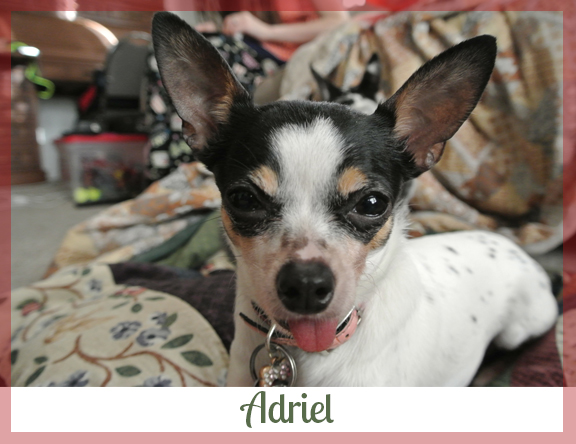 Adopted dog Adriel