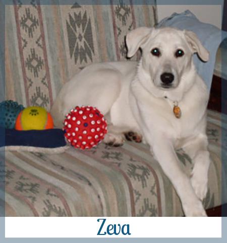 Adopted dog Zeva
