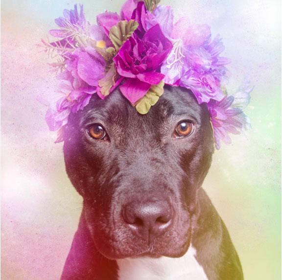 Flower power pit bull