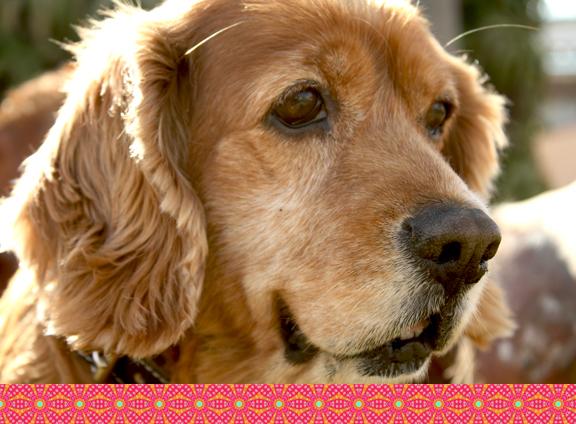 My dog Winnie Fierro