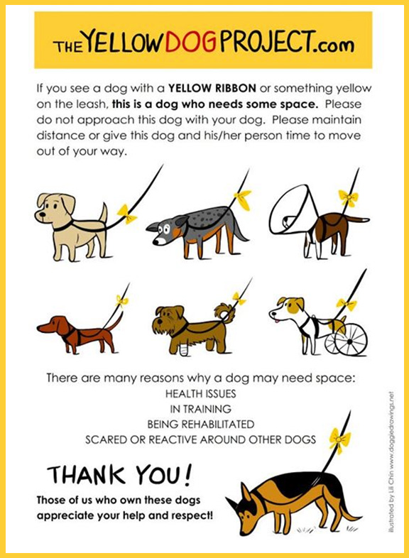 The yellow dog project poster