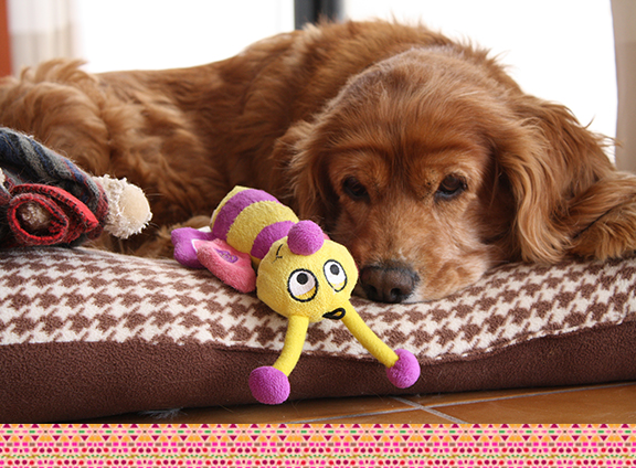 Winnie and toys 3