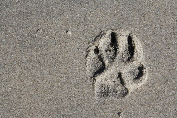 Paw on the sand