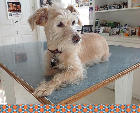 Dog Lola