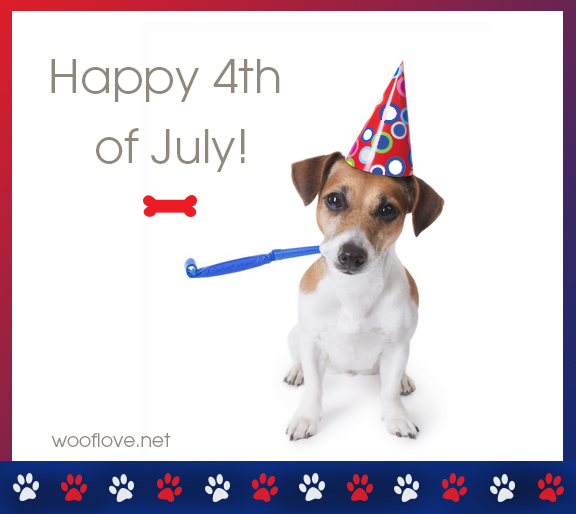 Dog on 4th of July