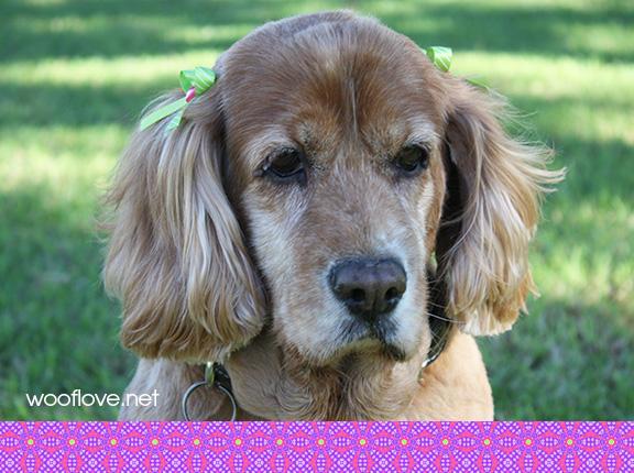 National adopt a senior dog month