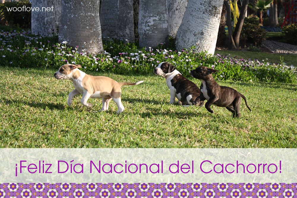 Dia-Nacional-del-Cachorro.jpg
