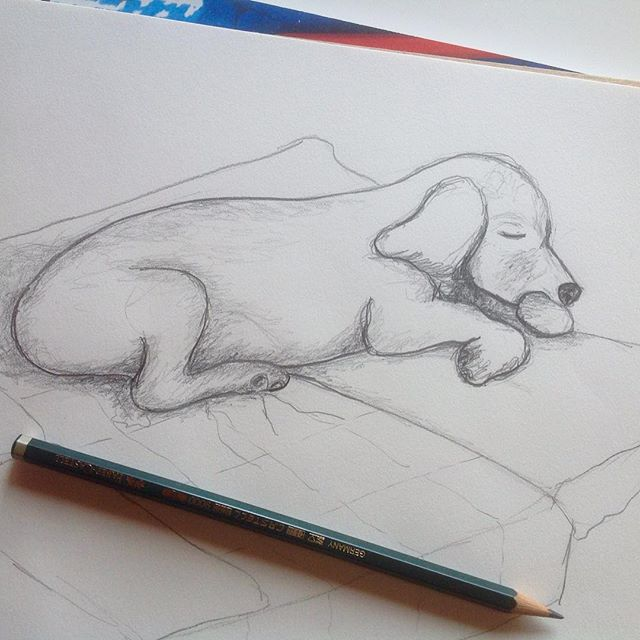 a quick sketch of my dog Winnie having sweet dreams : ) #dog #sketch #sketchbook #dogdrawing #dogillustration #illustration #pencilsketch #woofloveblogart