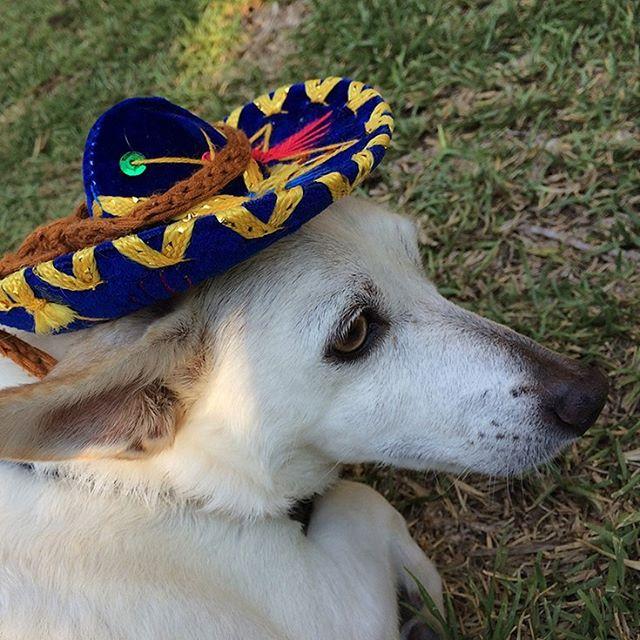 My chihuahua 🐕💖 #chihuahua #chihuahualove #mexico #charro #sombrerocharro #wooflove #woofloveblog